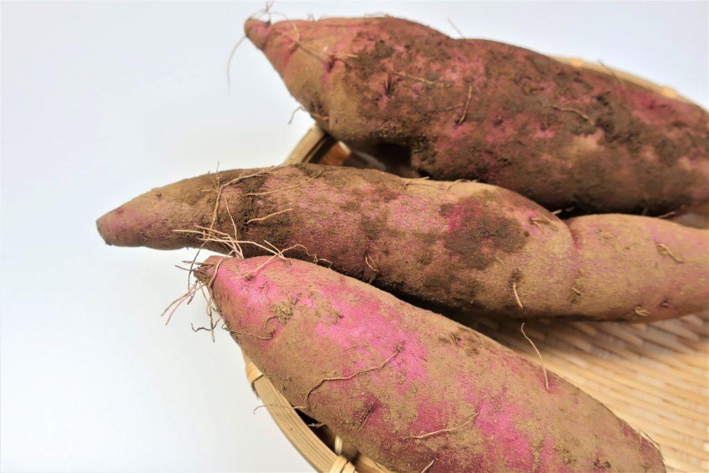サツマイモの品種別収穫時期
