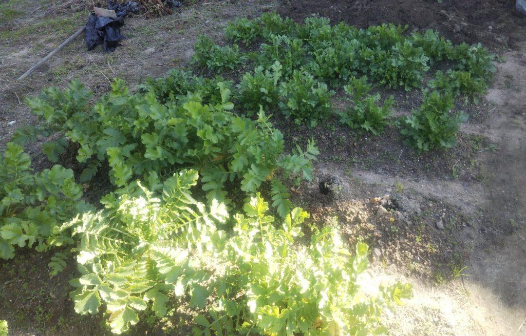 貸し農園での家庭菜園がおススメなワケ