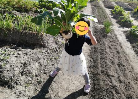 子供、家族との農作業で食育になる