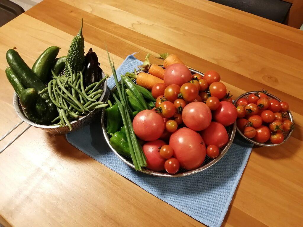 プランター菜園よりも栽培がし易く、収穫が期待できる